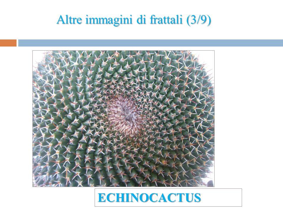 Altre immagini di frattali (3/9) ECHINOCACTUS