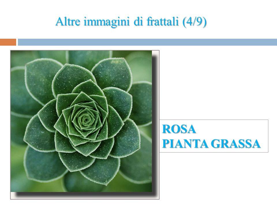 Altre immagini di frattali (4/9) ROSA PIANTA GRASSA