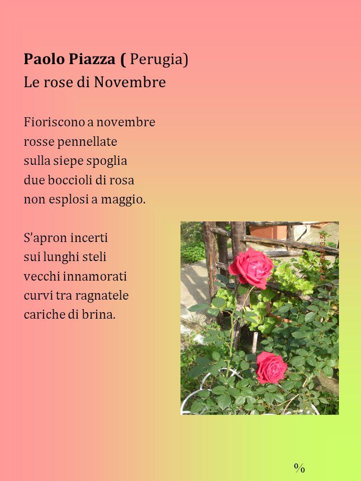 Paolo Piazza ( Perugia) Le rose di Novembre Fioriscono a novembre rosse pennellate sulla siepe spoglia due boccioli di rosa non esplosi a maggio.
