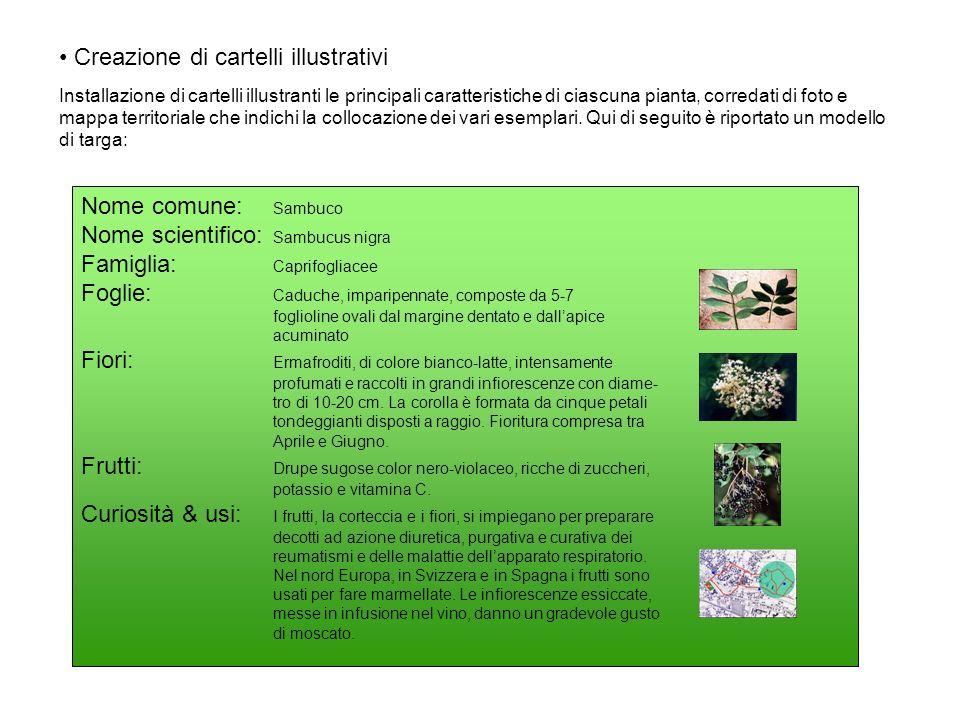Creazione di cartelli illustrativi Installazione di cartelli illustranti le principali caratteristiche di ciascuna pianta, corredati di foto e mappa t