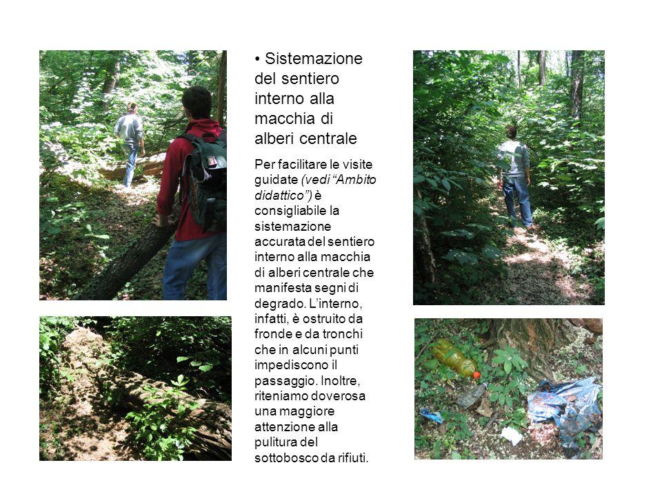 Sistemazione del sentiero interno alla macchia di alberi centrale Per facilitare le visite guidate (vedi Ambito didattico) è consigliabile la sistemazione accurata del sentiero interno alla macchia di alberi centrale che manifesta segni di degrado.