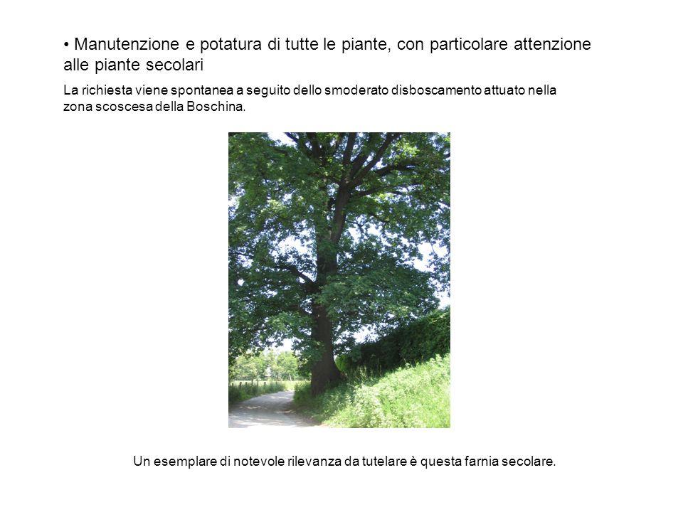 Manutenzione e potatura di tutte le piante, con particolare attenzione alle piante secolari La richiesta viene spontanea a seguito dello smoderato disboscamento attuato nella zona scoscesa della Boschina.