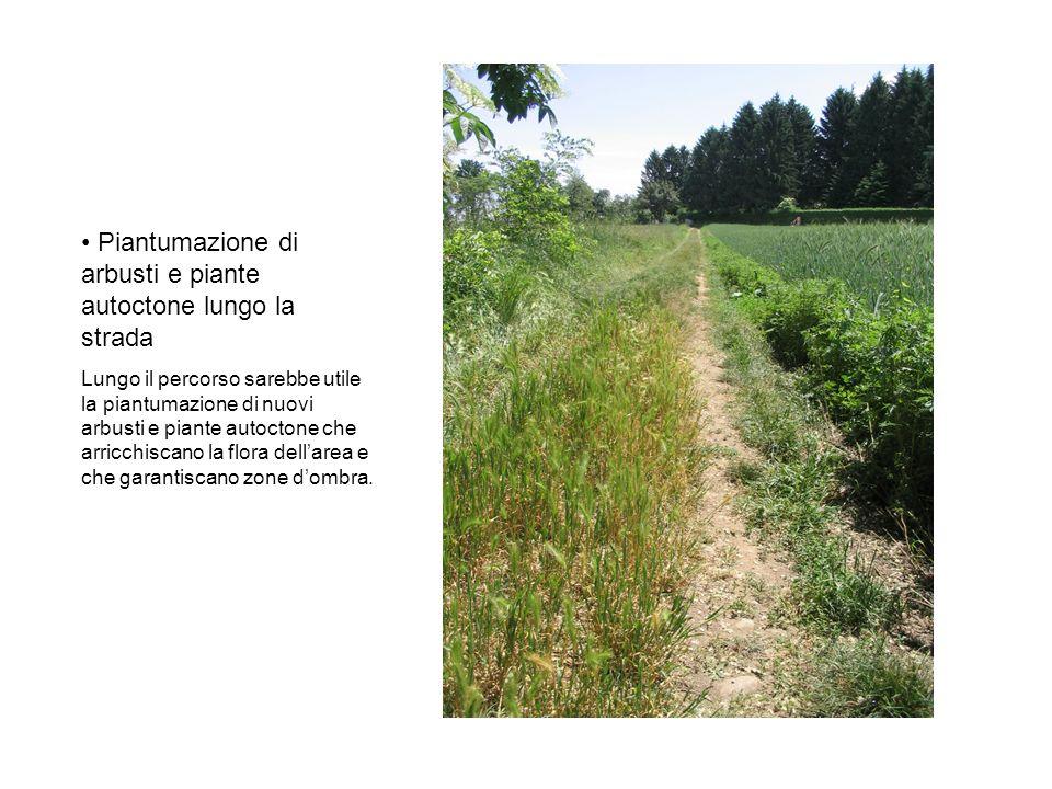Piantumazione di arbusti e piante autoctone lungo la strada Lungo il percorso sarebbe utile la piantumazione di nuovi arbusti e piante autoctone che arricchiscano la flora dellarea e che garantiscano zone dombra.