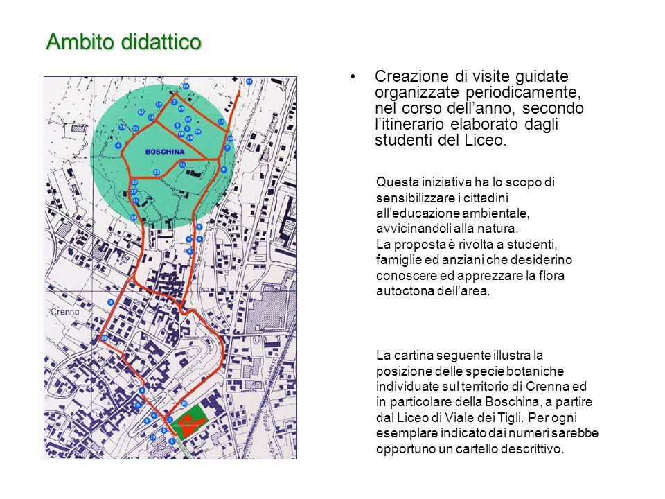 Creazione di visite guidate organizzate periodicamente, nel corso dellanno, secondo litinerario elaborato dagli studenti del Liceo.