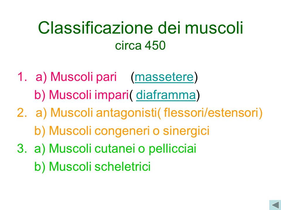 Classificazione dei muscoli circa 450 1.a) Muscoli pari (massetere)massetere b) Muscoli impari( diaframma)diaframma 2.a) Muscoli antagonisti( flessori