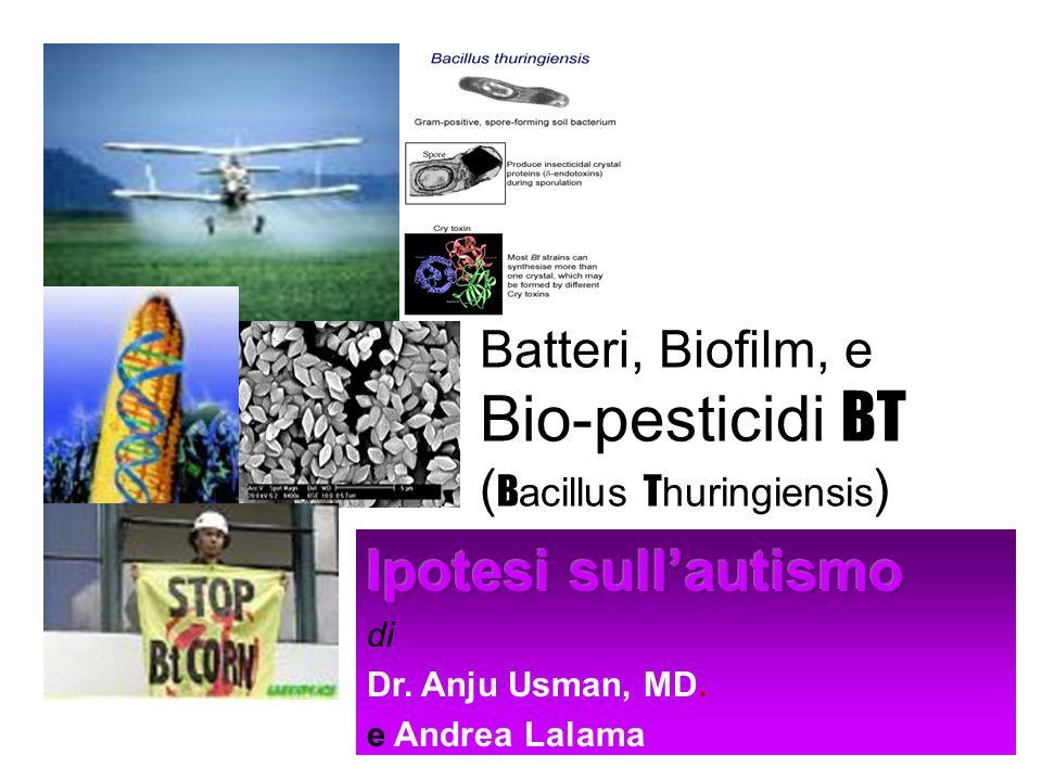 Prove raccolte sul BT Grano e cotone sono stati modificati geneticamente utilizzando la tossina del batterio Bacillus thuringiensis, detto BT.