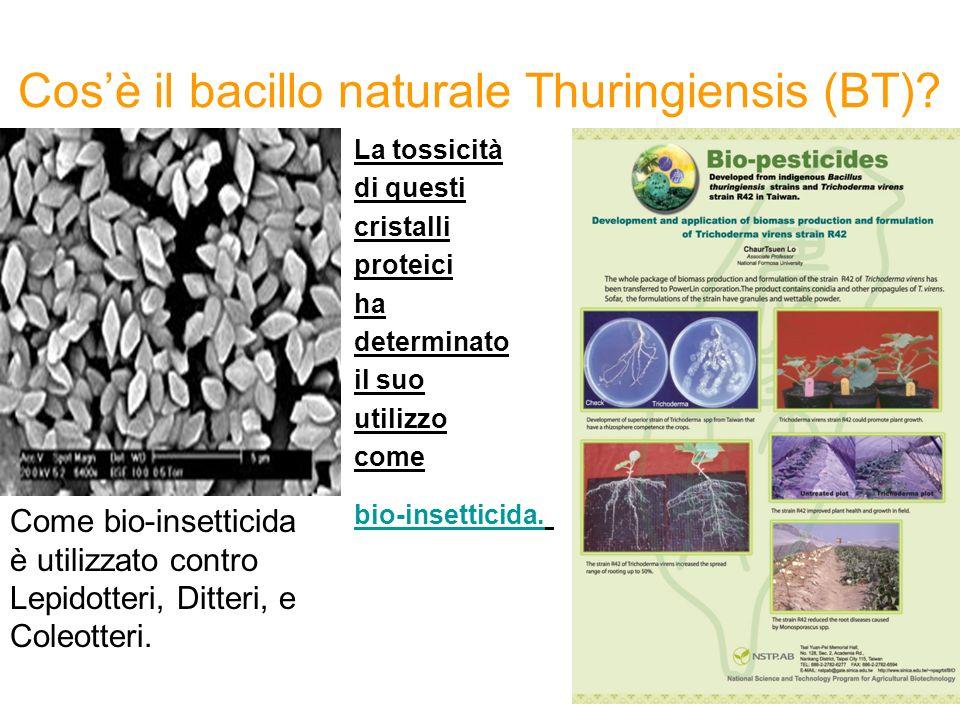 Cosè il bacillo naturale Thuringiensis (BT).
