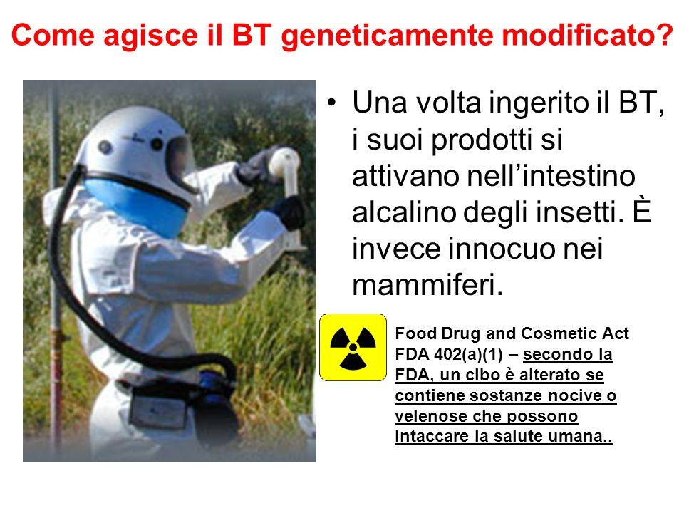 Come agisce il BT geneticamente modificato.