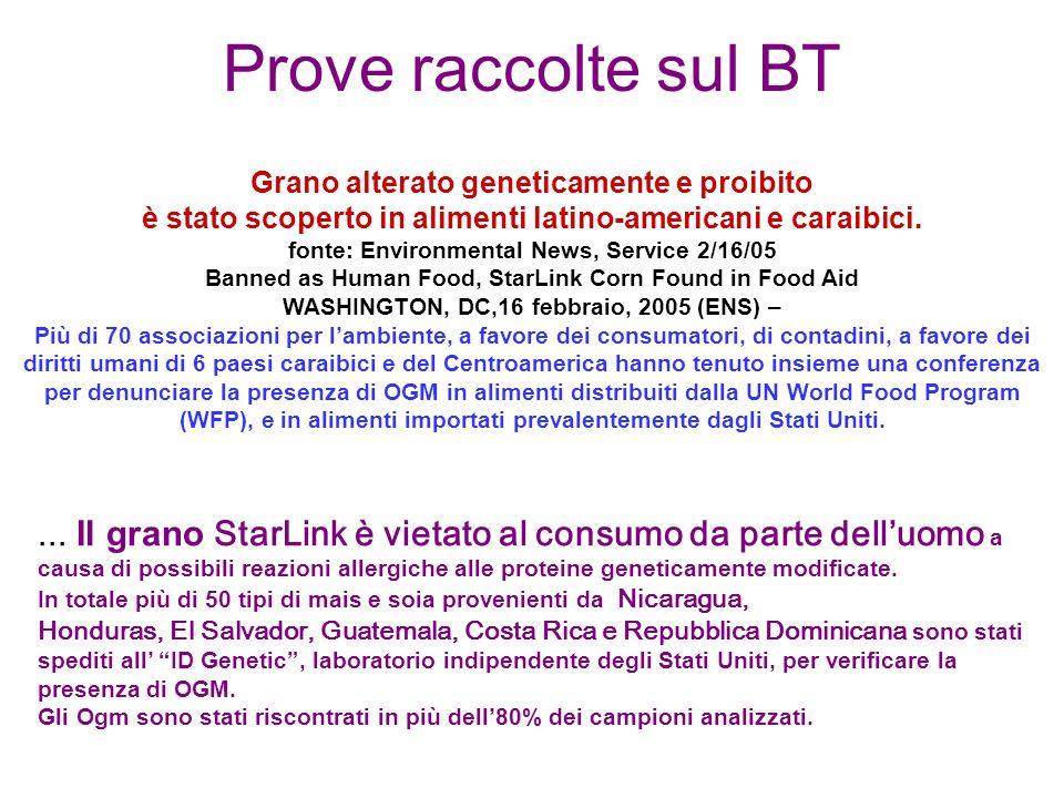 Prove raccolte sul BT Grano alterato geneticamente e proibito è stato scoperto in alimenti latino-americani e caraibici.
