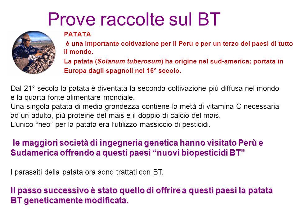 Prove raccolte sul BT PATATA è una importante coltivazione per il Perù e per un terzo dei paesi di tutto il mondo.