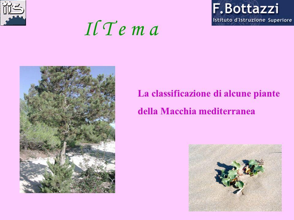 Il T e m a La classificazione di alcune piante della Macchia mediterranea