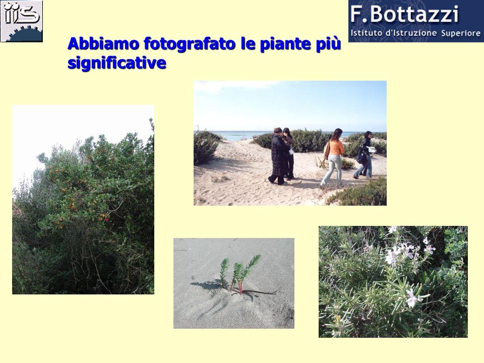 Abbiamo fotografato le piante più significative