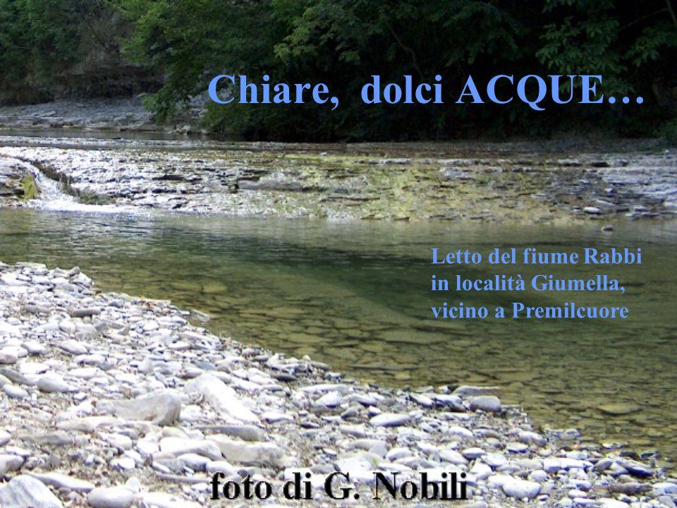 Chiare, dolci ACQUE… Letto del fiume Rabbi in località Giumella, vicino a Premilcuore