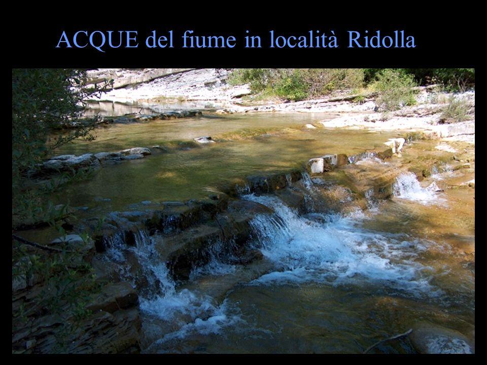 ACQUE del fiume in località Ridolla