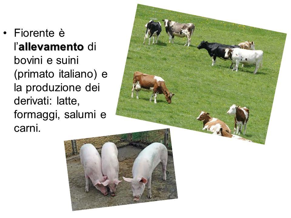 allevamentoFiorente è lallevamento di bovini e suini (primato italiano) e la produzione dei derivati: latte, formaggi, salumi e carni.
