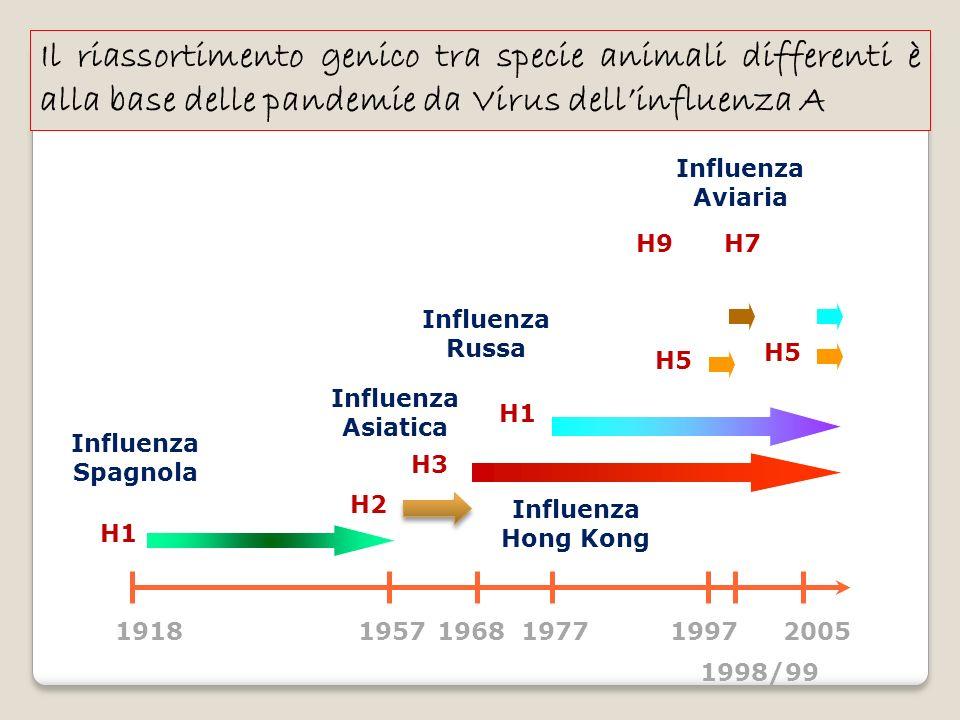 Il riassortimento genico tra specie animali differenti è alla base delle pandemie da Virus dellinfluenza A 19181957196819771997 1998/99 2005 H1 H3 H2