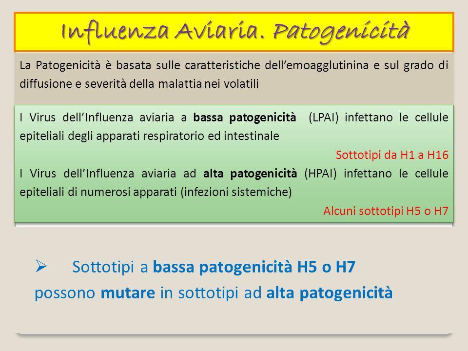 Influenza Aviaria. Patogenicità La Patogenicità è basata sulle caratteristiche dellemoagglutinina e sul grado di diffusione e severità della malattia