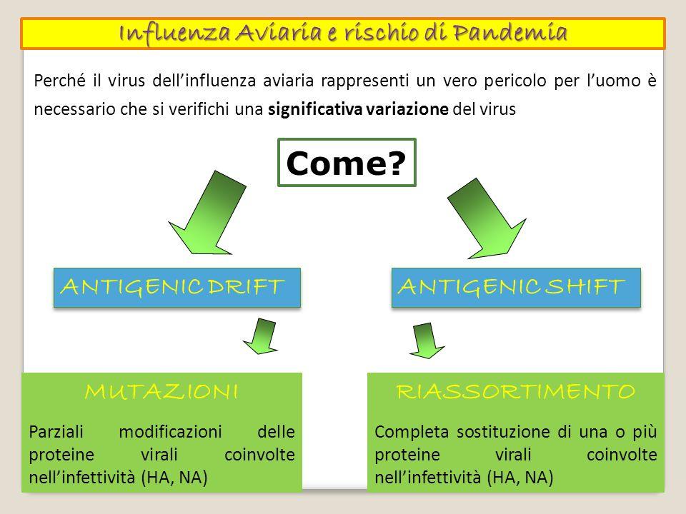 Perché il virus dellinfluenza aviaria rappresenti un vero pericolo per luomo è necessario che si verifichi una significativa variazione del virus Come