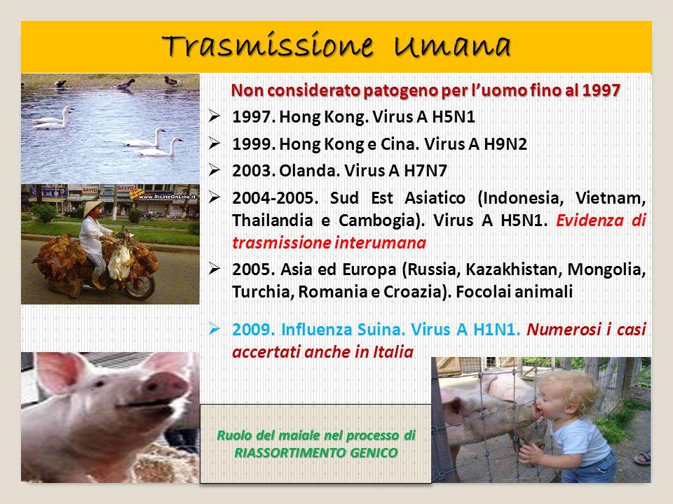 Non considerato patogeno per luomo fino al 1997 1997. Hong Kong. Virus A H5N1 1999. Hong Kong e Cina. Virus A H9N2 2003. Olanda. Virus A H7N7 2004-200