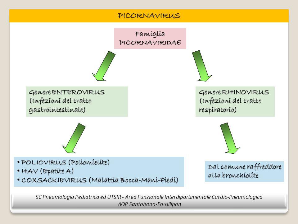 PICORNAVIRUS Famiglia PICORNAVIRIDAE Genere ENTEROVIRUS (Infezioni del tratto gastrointestinale) Genere RHINOVIRUS (Infezioni del tratto respiratorio)