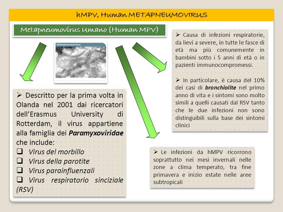 hMPV, Human METAPNEUMOVIRUS Metapneumovirus Umano (Human MPV) Descritto per la prima volta in Olanda nel 2001 dai ricercatori dellErasmus University d
