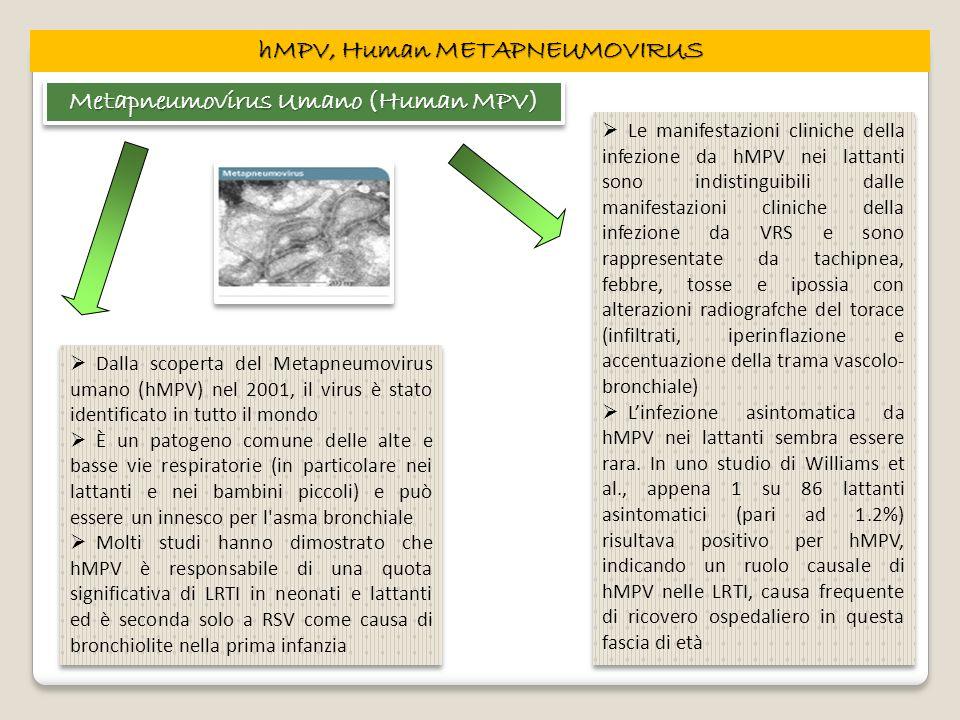 hMPV, Human METAPNEUMOVIRUS Metapneumovirus Umano (Human MPV) Dalla scoperta del Metapneumovirus umano (hMPV) nel 2001, il virus è stato identificato