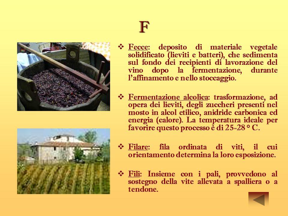 F Fecce: deposito di materiale vegetale solidificato (lieviti e batteri), che sedimenta sul fondo dei recipienti di lavorazione del vino dopo la ferme