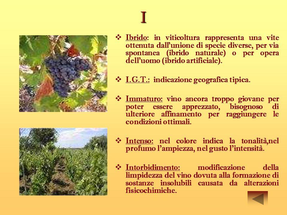 I Ibrido: in viticoltura rappresenta una vite ottenuta dallunione di specie diverse, per via spontanea (ibrido naturale) o per opera dell'uomo (ibrido