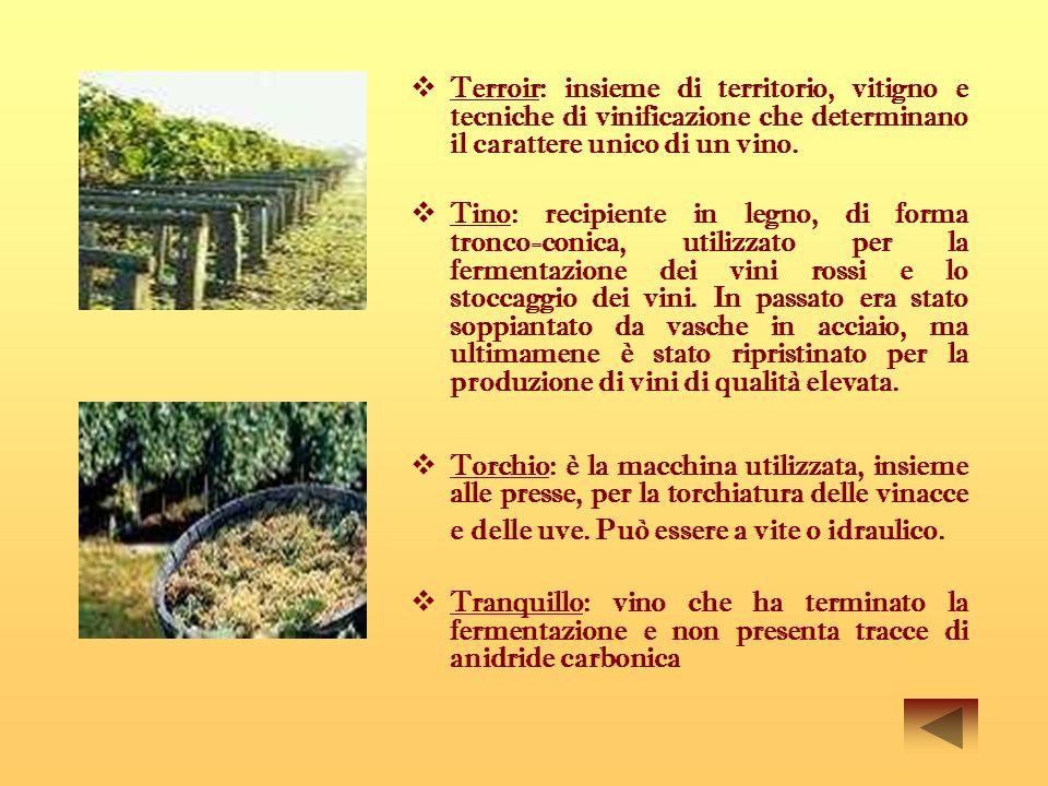 Terroir: insieme di territorio, vitigno e tecniche di vinificazione che determinano il carattere unico di un vino. Tino: recipiente in legno, di forma