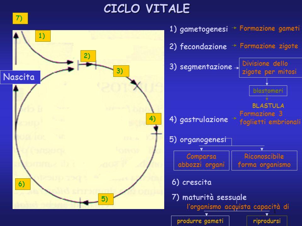 CICLO VITALE Fase diploide Fase aploide Individuo e linea germinale FECONDAZIONE gameti Gamete + gamete zigote fecondazione embrione Individuo individuo Cellule somatiche Cellule germinali Cellule germinali primordiali mitosi MITOSI 2 cellule figlie identiche 1.