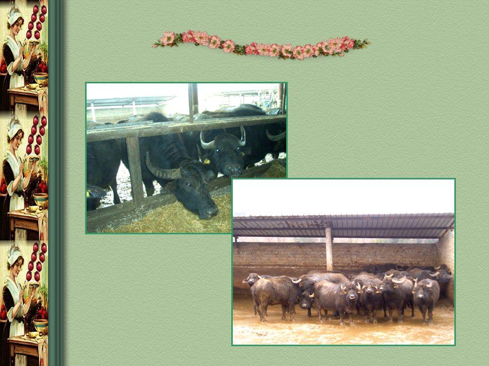 PASTORIZZAZIONE IL LATTE PASTORIZZATO Il processo di pastorizzazione consiste nel riscaldamento del latte a determinate temperature e per periodi di tempo ben calibrati e successivo rapido raffreddamento.