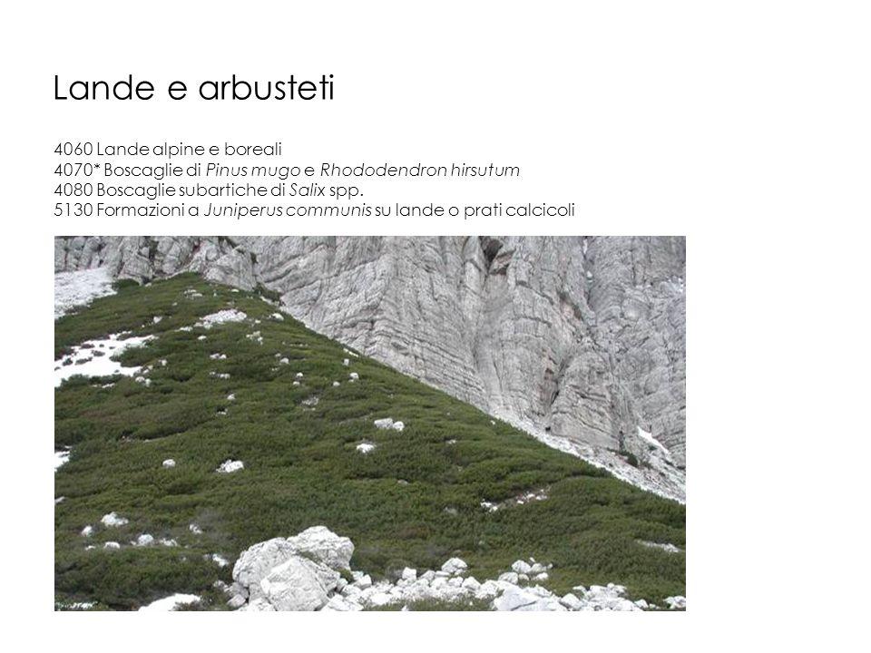 Lande e arbusteti 4060 Lande alpine e boreali 4070* Boscaglie di Pinus mugo e Rhododendron hirsutum 4080 Boscaglie subartiche di Salix spp. 5130 Forma