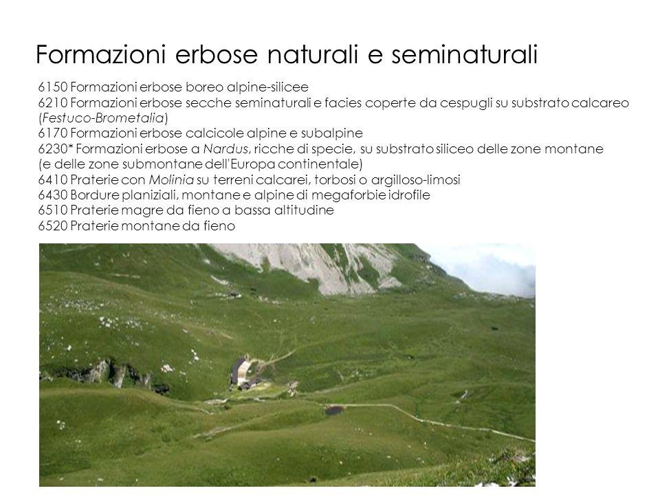 Formazioni erbose naturali e seminaturali 6150 Formazioni erbose boreo alpine-silicee 6210 Formazioni erbose secche seminaturali e facies coperte da c
