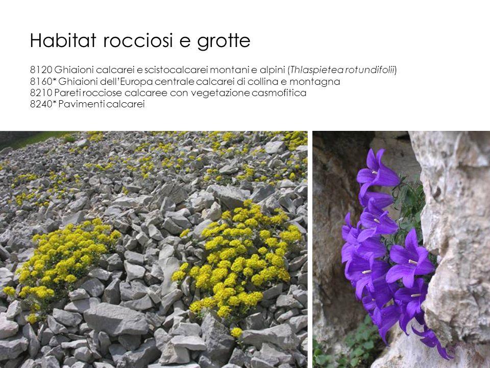 Habitat rocciosi e grotte 8120 Ghiaioni calcarei e scistocalcarei montani e alpini (Thlaspietea rotundifolii) 8160* Ghiaioni dellEuropa centrale calca