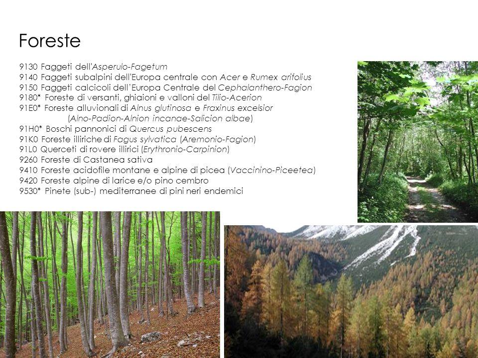 Foreste 9130 Faggeti dell'Asperulo-Fagetum 9140 Faggeti subalpini dell'Europa centrale con Acer e Rumex arifolius 9150 Faggeti calcicoli dellEuropa Ce