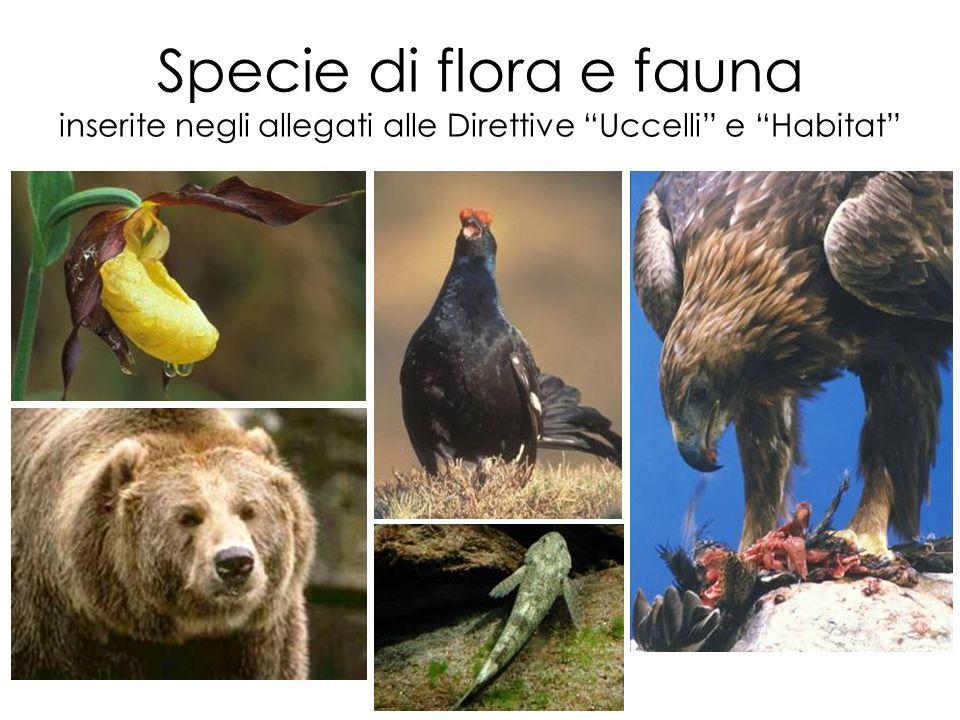 Specie di flora e fauna inserite negli allegati alle Direttive Uccelli e Habitat