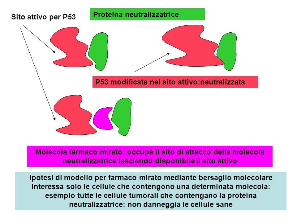 Sito attivo per P53 Proteina neutralizzatrice P53 modificata nel sito attivo:neutralizzata Molecola farmaco mirato: occupa il sito di attacco della mo