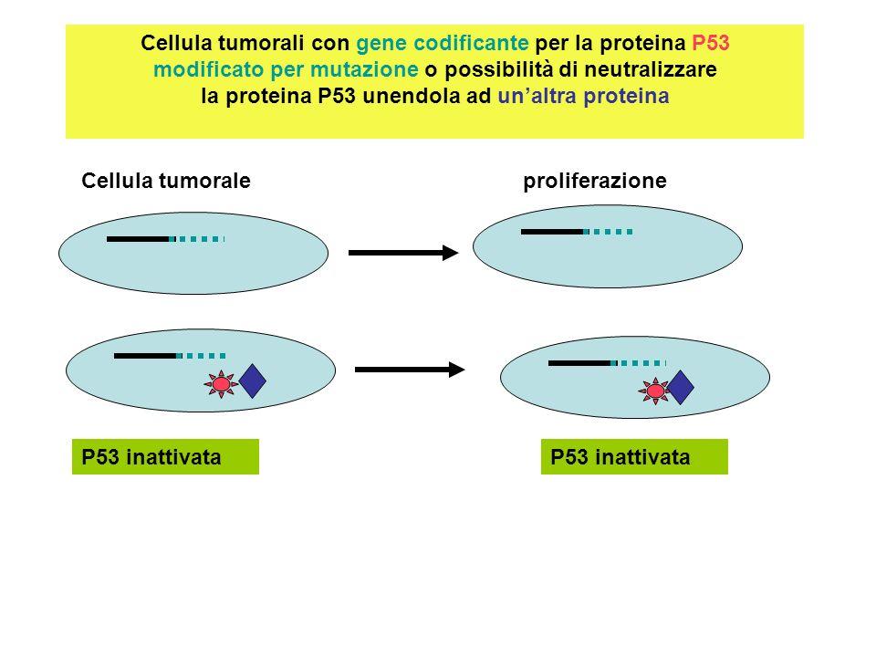Cercare una molecola che impedisca la neutralizzazione della P53 oppure intervenire sul gene mutato Cellula tumorale Intervento sul gene ?non riuscito P53 presente ma inattivata : p53 con interposta molecola permette la riattivazione della P53 e induce la apoptosi nella cellula tumorarle apoptosi