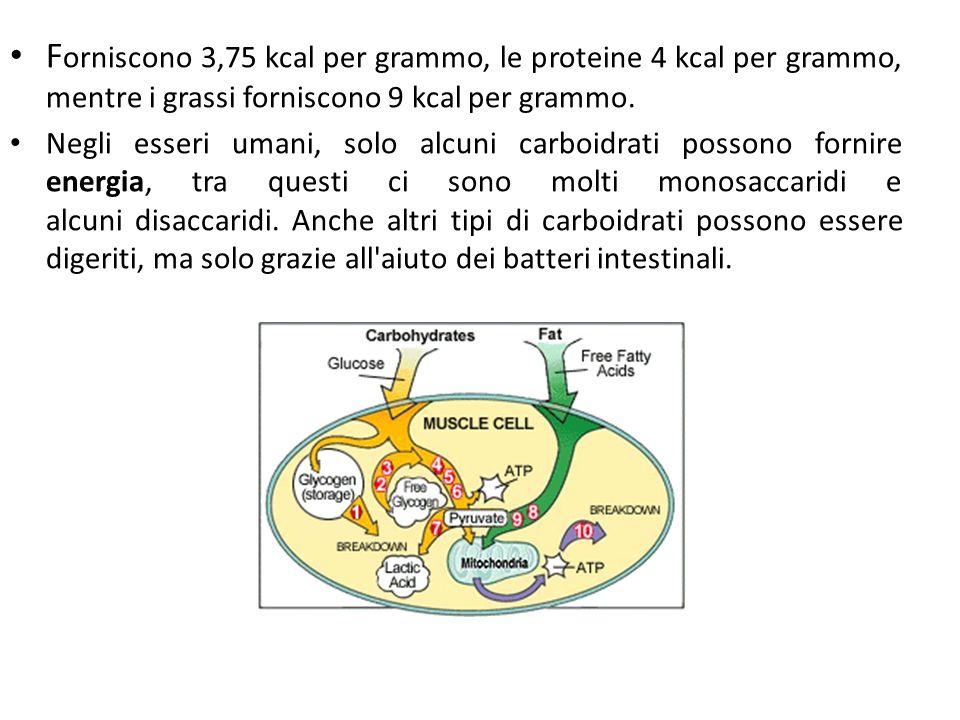F orniscono 3,75 kcal per grammo, le proteine 4 kcal per grammo, mentre i grassi forniscono 9 kcal per grammo.