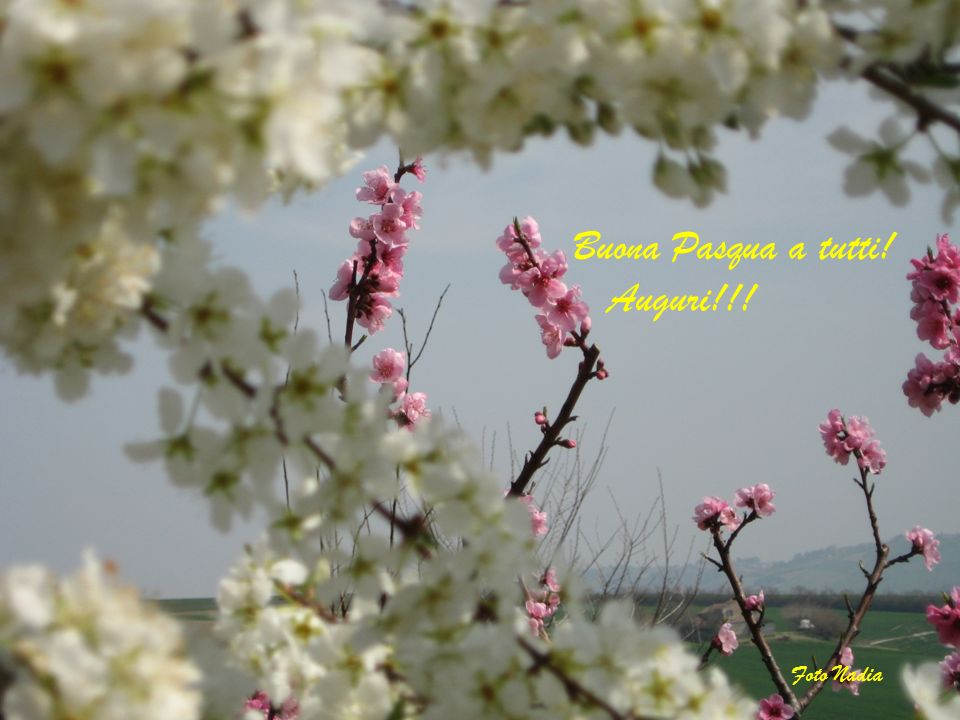 Buona Pasqua a tutti! Auguri!!! Foto Nadia