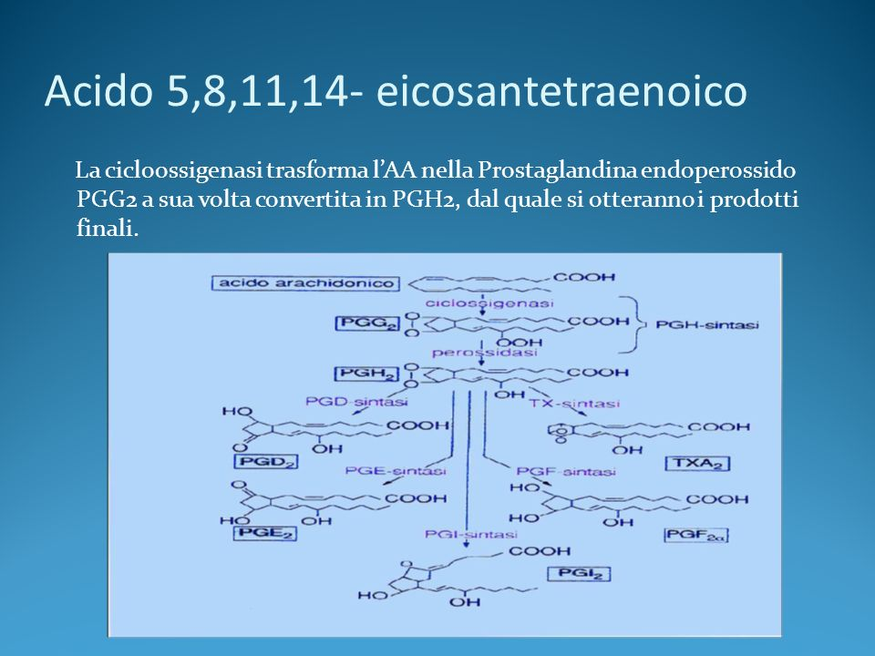 Acido 5,8,11,14- eicosantetraenoico La cicloossigenasi trasforma lAA nella Prostaglandina endoperossido PGG2 a sua volta convertita in PGH2, dal quale si otteranno i prodotti finali.