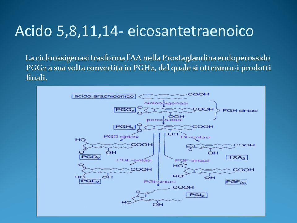 Acido 5,8,11,14- eicosantetraenoico La cicloossigenasi trasforma lAA nella Prostaglandina endoperossido PGG2 a sua volta convertita in PGH2, dal quale