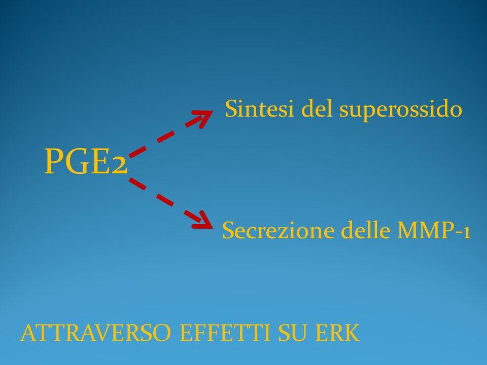 PGE2 Sintesi del superossido Secrezione delle MMP-1 ATTRAVERSO EFFETTI SU ERK