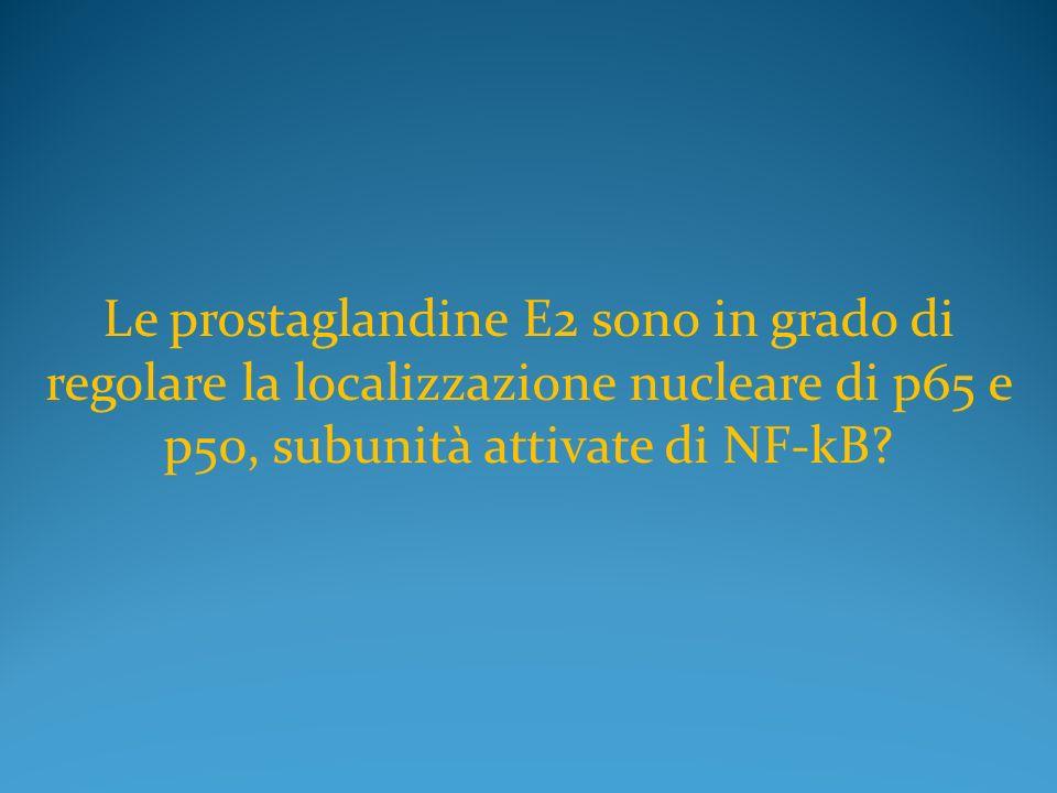 Le prostaglandine E2 sono in grado di regolare la localizzazione nucleare di p65 e p50, subunità attivate di NF-kB?