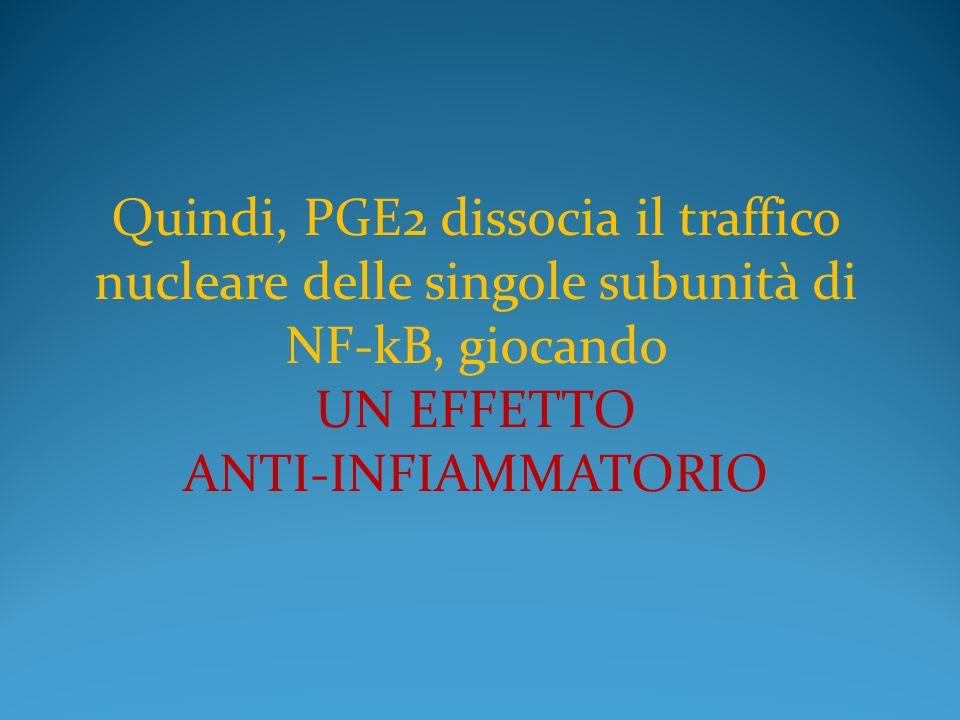 Quindi, PGE2 dissocia il traffico nucleare delle singole subunità di NF-kB, giocando UN EFFETTO ANTI-INFIAMMATORIO