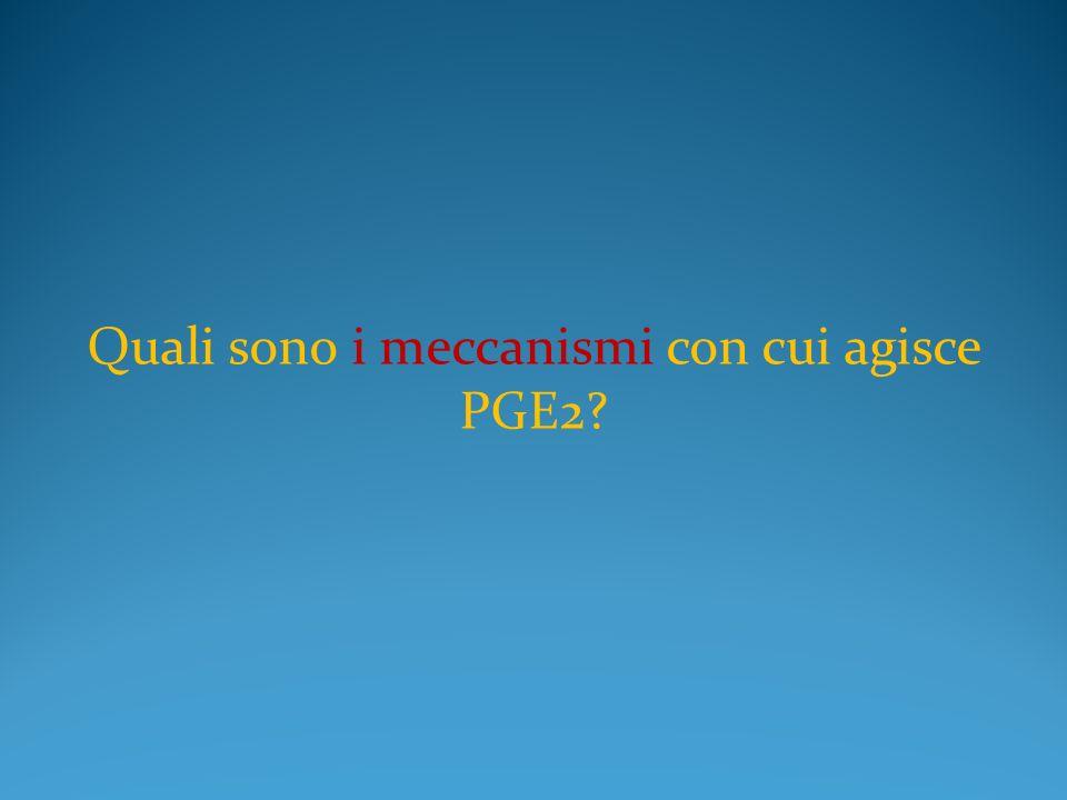Quali sono i meccanismi con cui agisce PGE2?