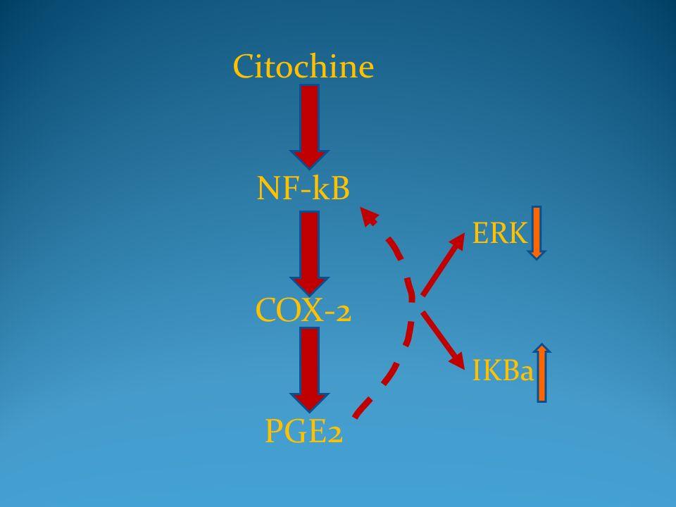 Citochine NF-kB COX-2 PGE2 ERK IKBa