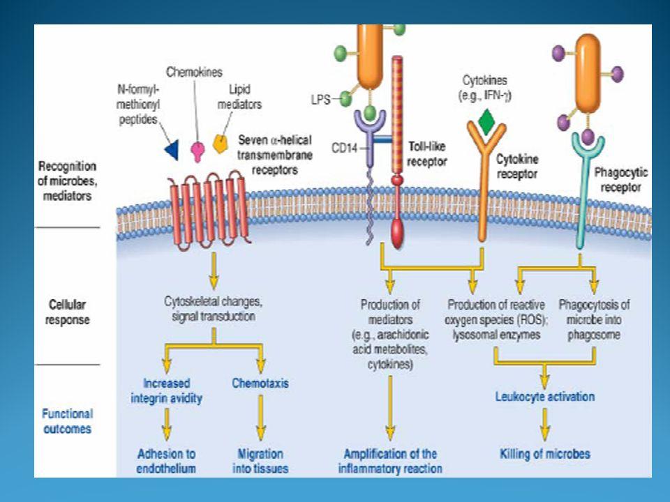 Le prostaglandine si formano velocemente, esercitano i loro effetti localmente