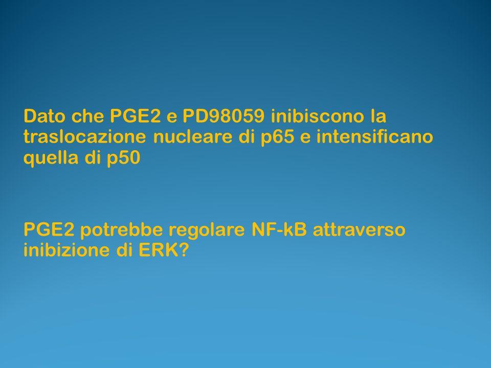 Dato che PGE2 e PD98059 inibiscono la traslocazione nucleare di p65 e intensificano quella di p50 PGE2 potrebbe regolare NF-kB attraverso inibizione d