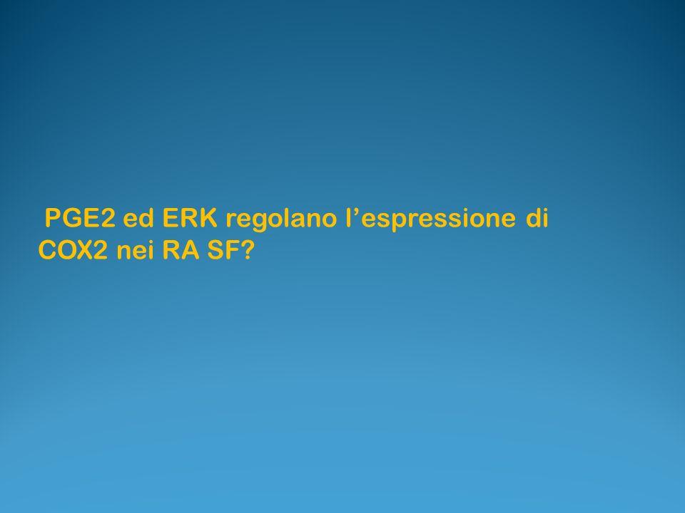 PGE2 ed ERK regolano lespressione di COX2 nei RA SF?